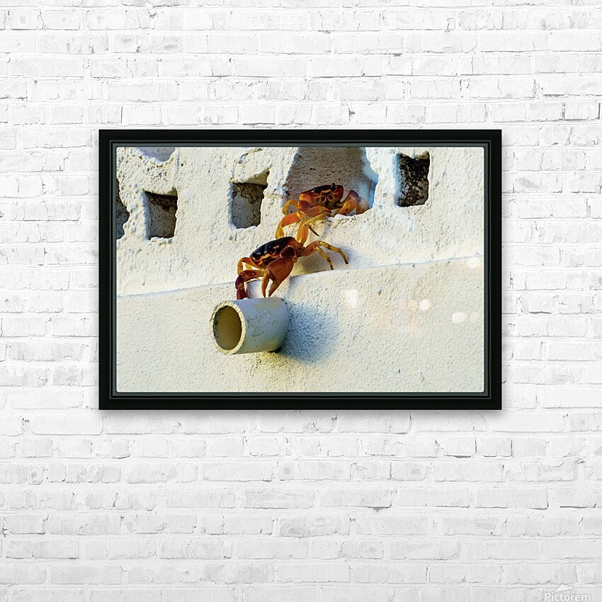 Cayman Crabs HD Sublimation Metal print with Decorating Float Frame (BOX)