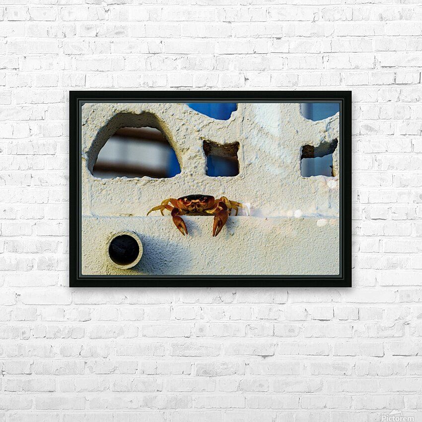 Cayman Crab Hanging Out HD Sublimation Metal print with Decorating Float Frame (BOX)