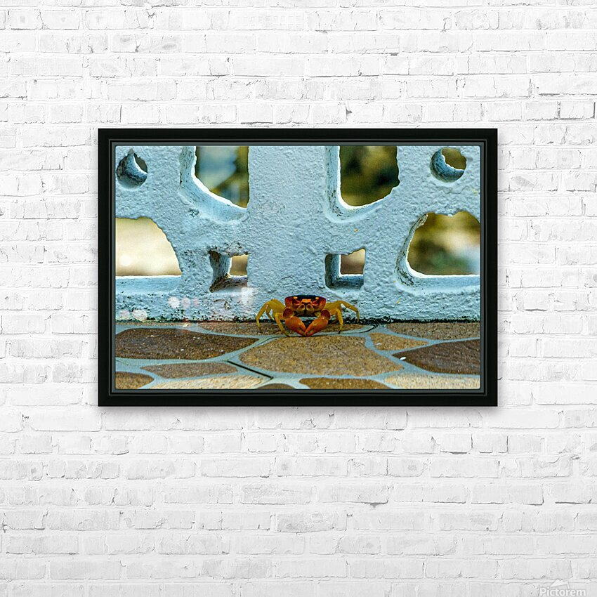 Cayman Crab HD Sublimation Metal print with Decorating Float Frame (BOX)
