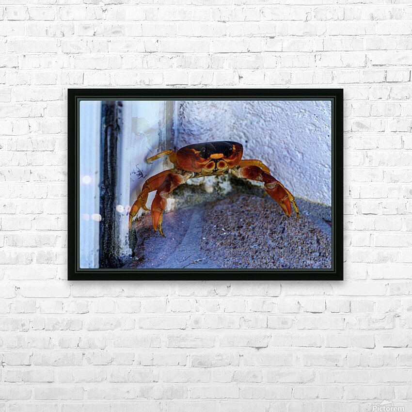Cayman Cornered Crab HD Sublimation Metal print with Decorating Float Frame (BOX)