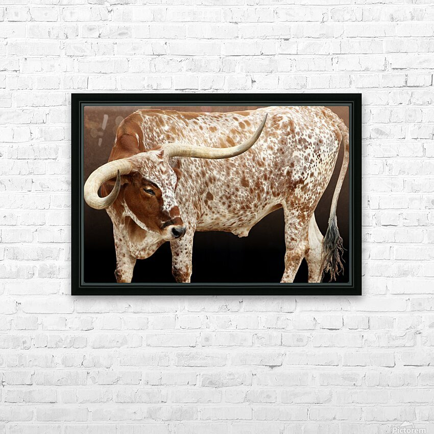 Longhorn Steer Profile 7x5 HD Sublimation Metal print with Decorating Float Frame (BOX)
