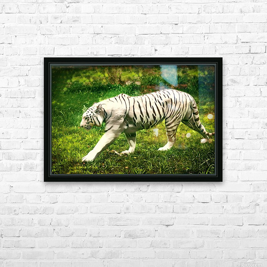 White Bengal Tiger HD Sublimation Metal print with Decorating Float Frame (BOX)