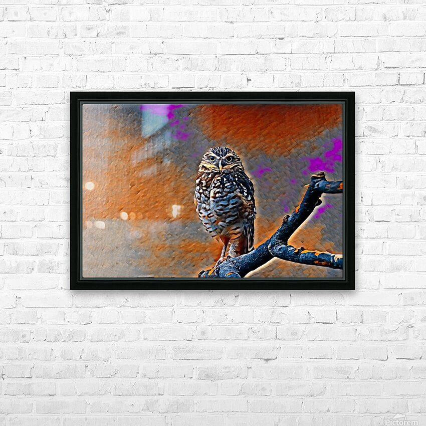 OWL - Stylized HD Sublimation Metal print with Decorating Float Frame (BOX)