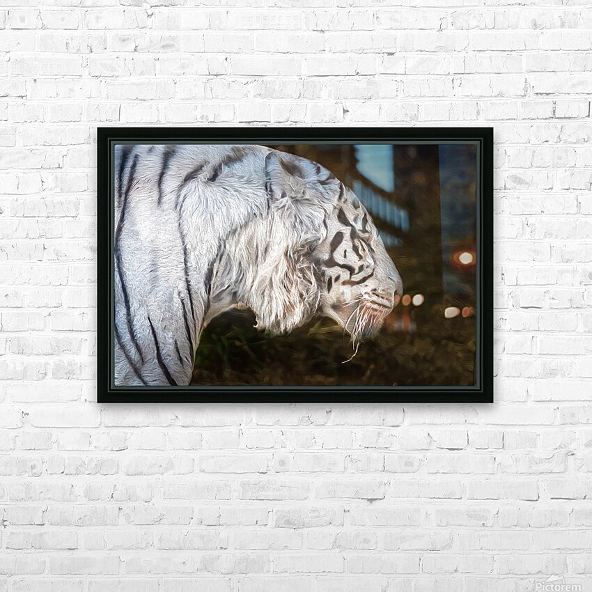 White Bengal Tiger 2 HD Sublimation Metal print with Decorating Float Frame (BOX)
