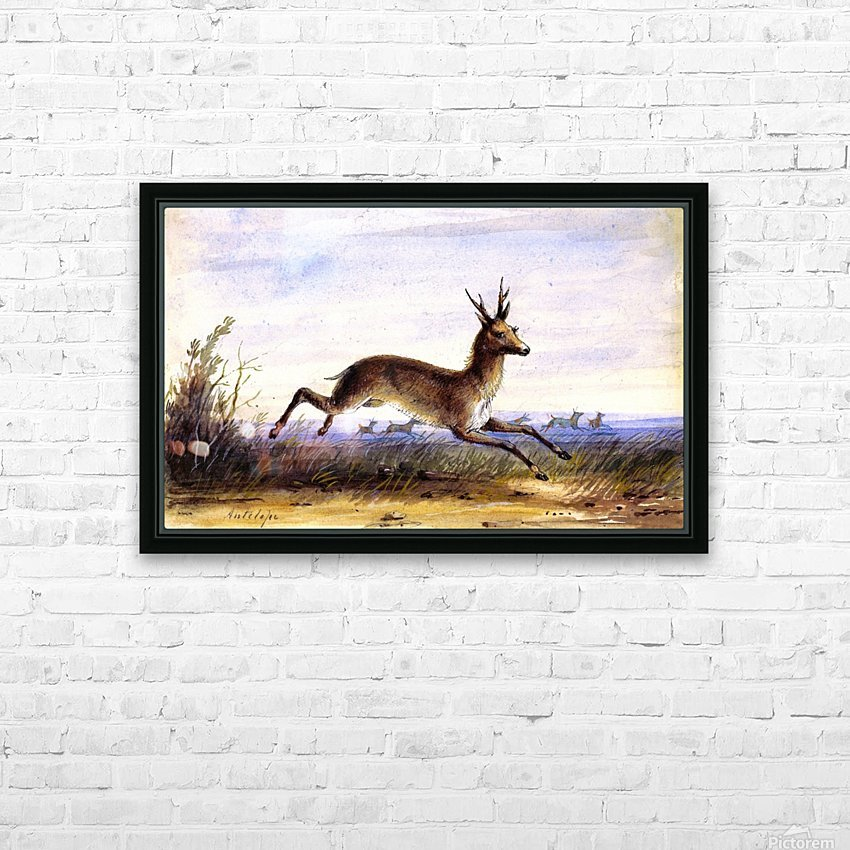 Antelope running HD Sublimation Metal print with Decorating Float Frame (BOX)