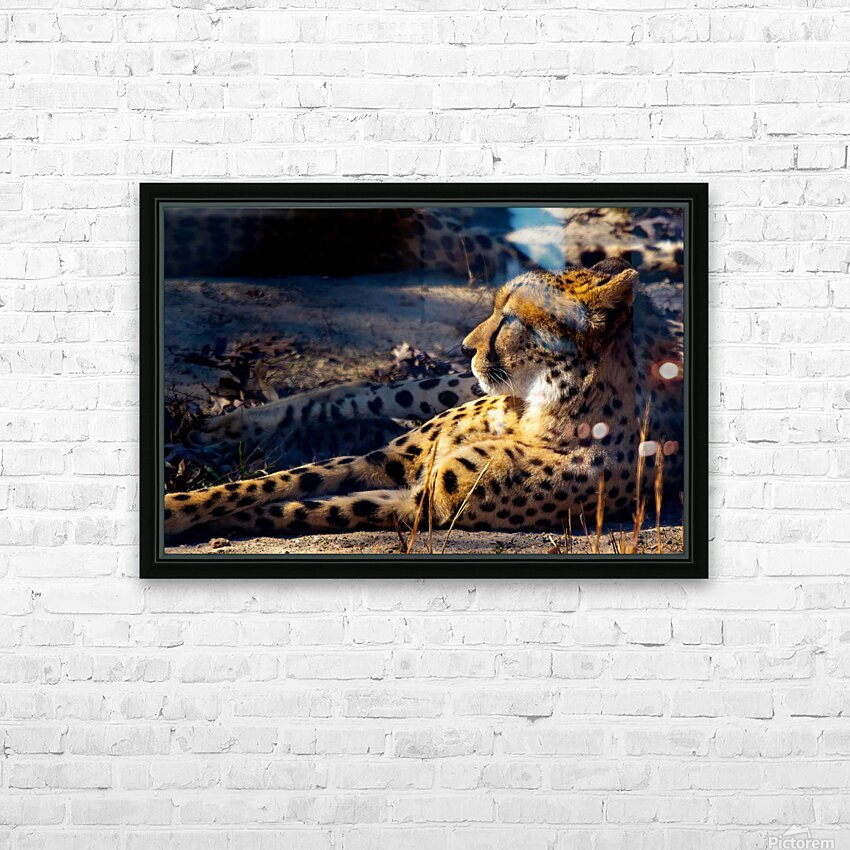 Cheetah HD Sublimation Metal print with Decorating Float Frame (BOX)