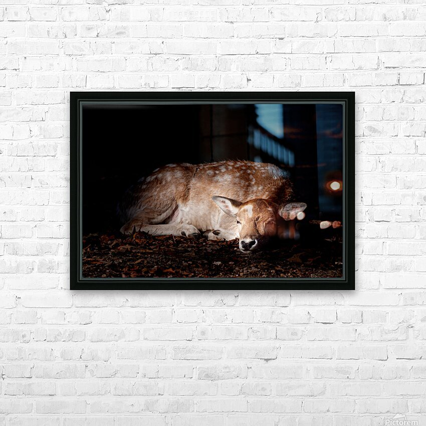 Fallow Deer 2 HD Sublimation Metal print with Decorating Float Frame (BOX)