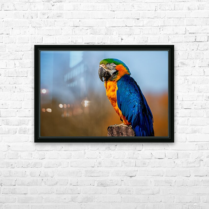 Parrot HD Sublimation Metal print with Decorating Float Frame (BOX)