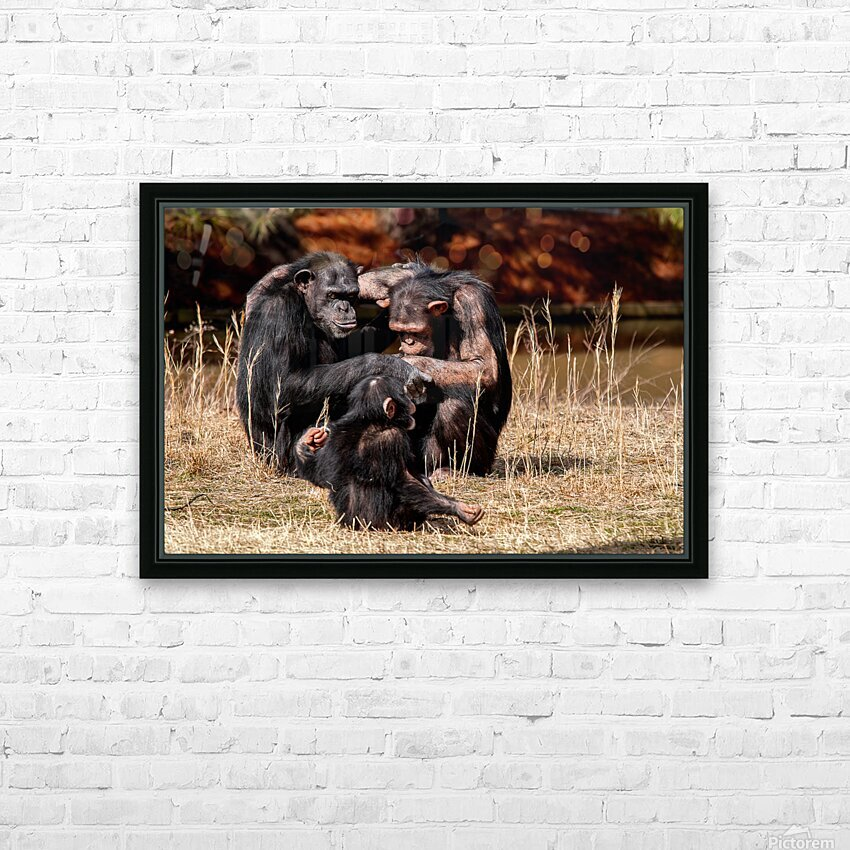Chimpanzee Family HD Sublimation Metal print with Decorating Float Frame (BOX)