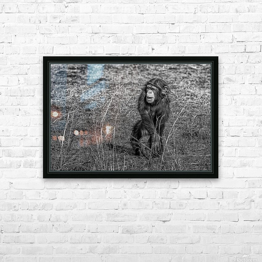 Baby Chimp 2 HD Sublimation Metal print with Decorating Float Frame (BOX)
