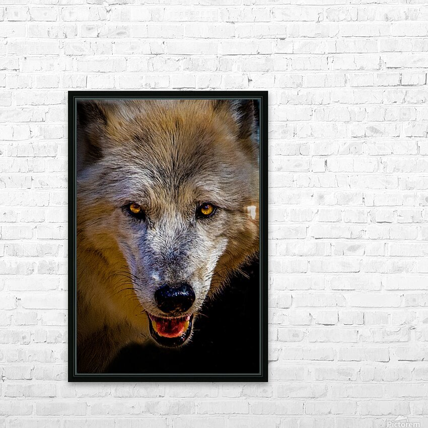 Wolf 2 HD Sublimation Metal print with Decorating Float Frame (BOX)