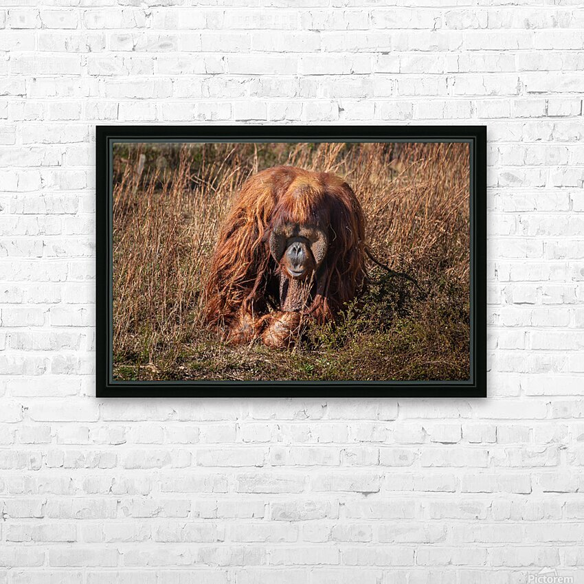 Orangutan HD Sublimation Metal print with Decorating Float Frame (BOX)