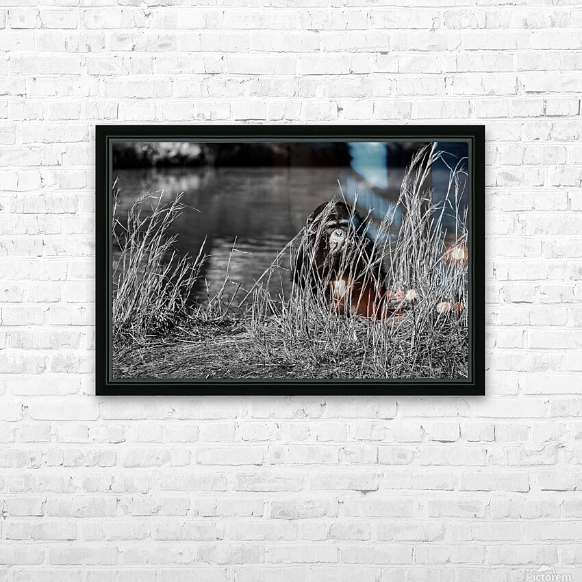 Baby Chimp 1 HD Sublimation Metal print with Decorating Float Frame (BOX)