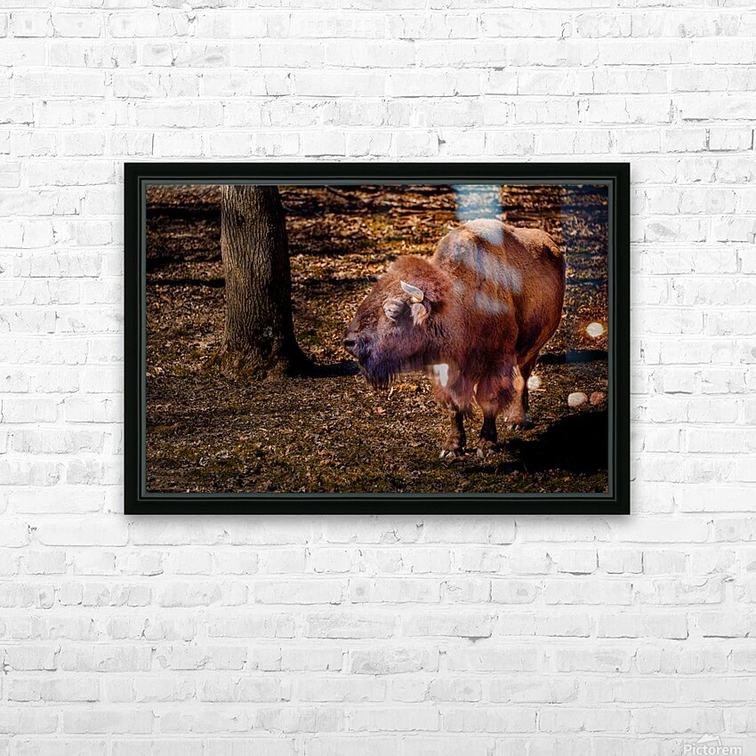 Bison HD Sublimation Metal print with Decorating Float Frame (BOX)