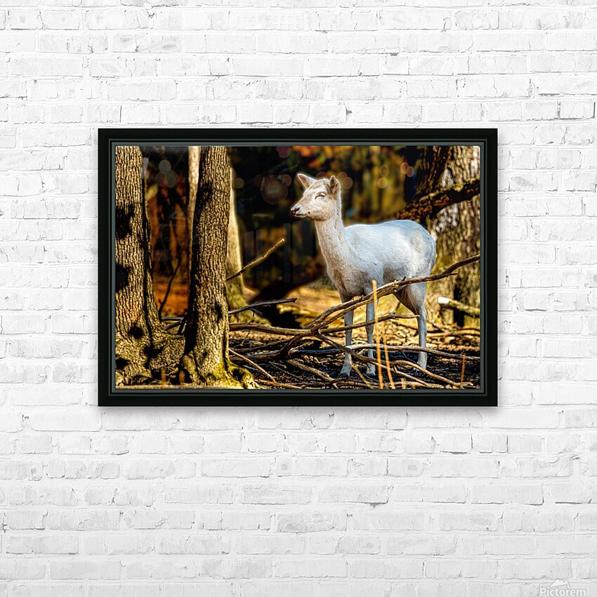 Fallow Deer 3 HD Sublimation Metal print with Decorating Float Frame (BOX)