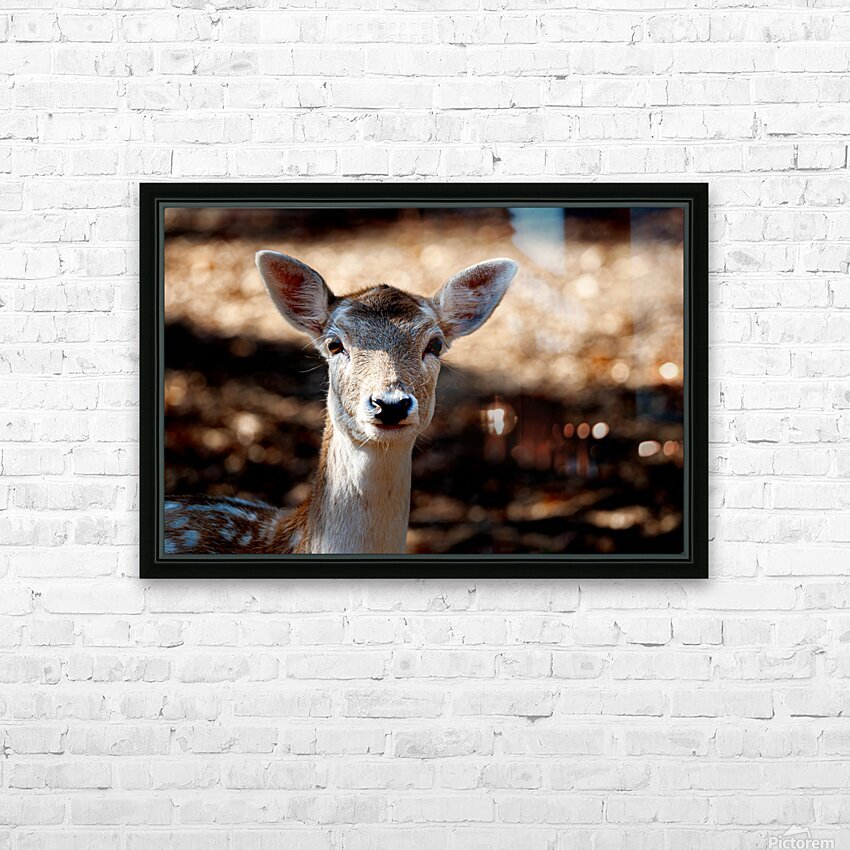 Fallow Deer 1 HD Sublimation Metal print with Decorating Float Frame (BOX)