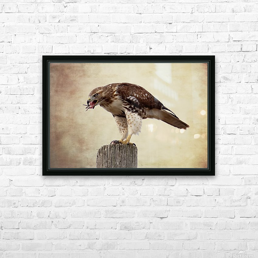 Meal Time for a Hawk HD Sublimation Metal print with Decorating Float Frame (BOX)