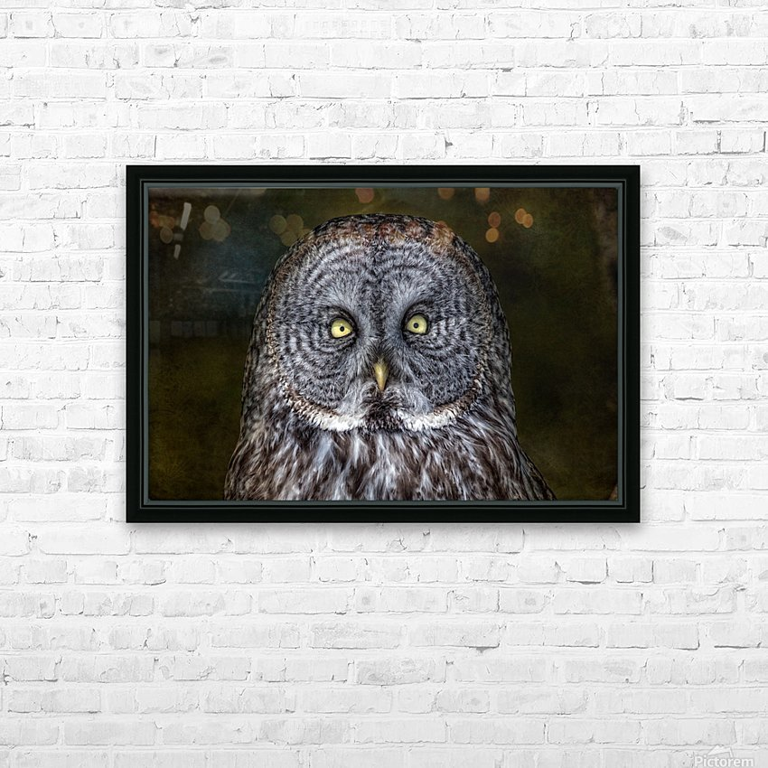 Stare Down with a Great Grey Owl HD Sublimation Metal print with Decorating Float Frame (BOX)