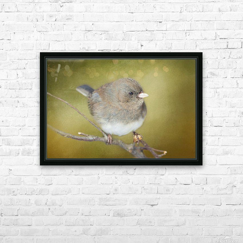 Dark Eyed Junco with Texture HD Sublimation Metal print with Decorating Float Frame (BOX)