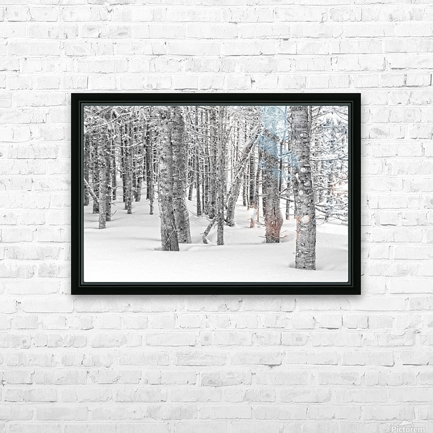 Pines at the Skyline Trail HD Sublimation Metal print with Decorating Float Frame (BOX)