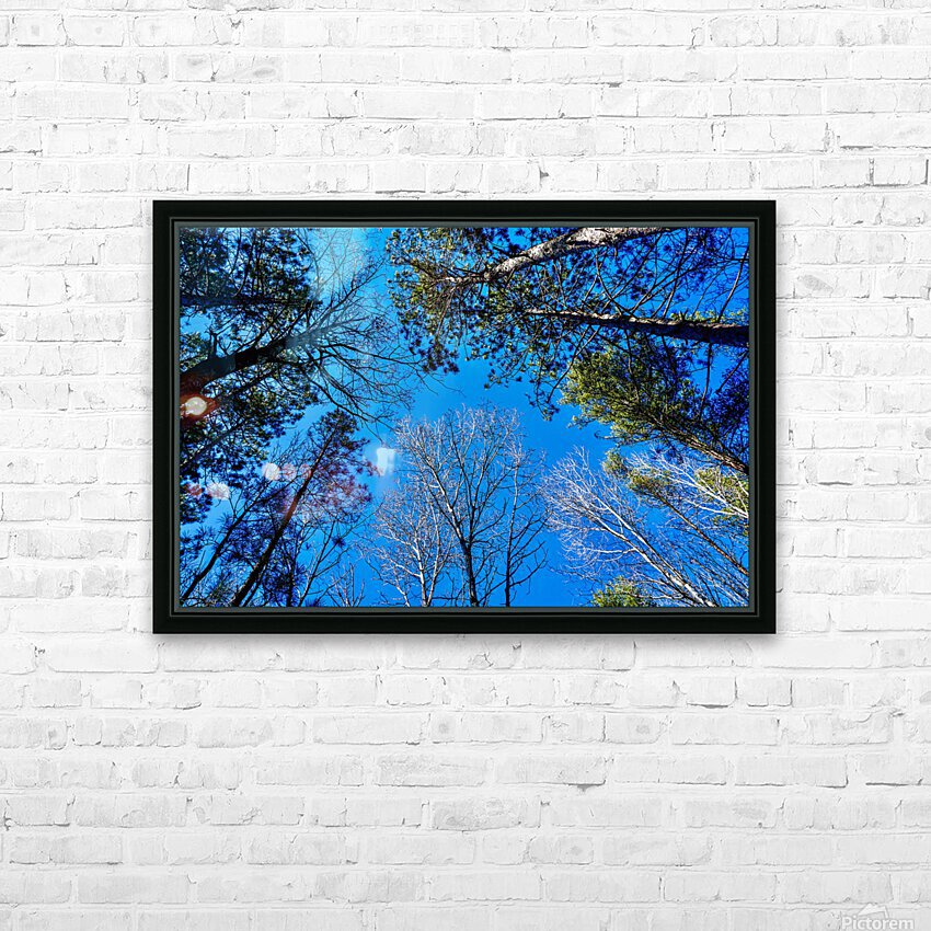 Towering Trees Bright Blue Sky HD Sublimation Metal print with Decorating Float Frame (BOX)