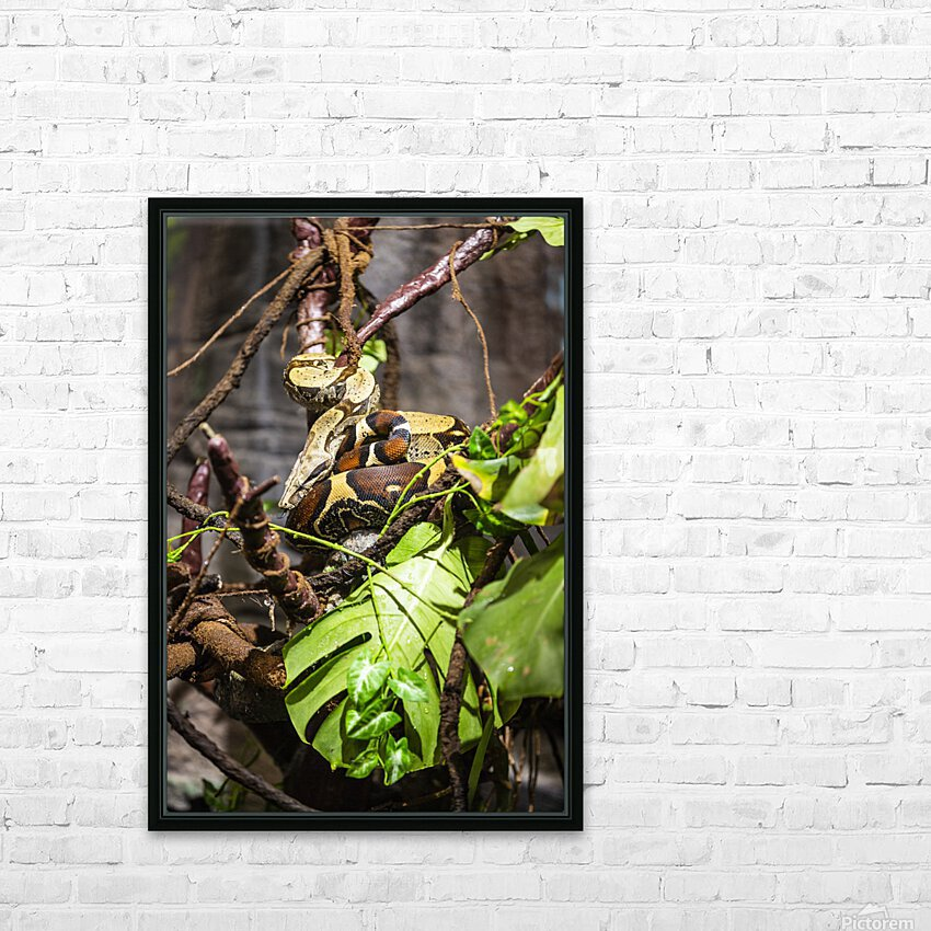 Curled Up  Python  HD Sublimation Metal print with Decorating Float Frame (BOX)
