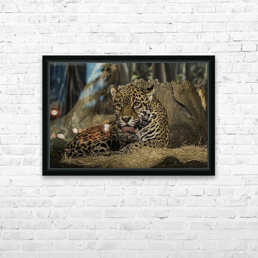 Morning Bath  Jaguar  HD Sublimation Metal print with Decorating Float Frame (BOX)