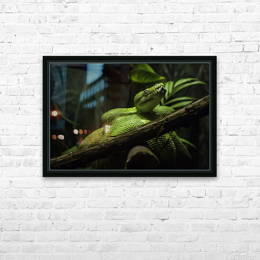 High Detail  Green Boa  HD Sublimation Metal print with Decorating Float Frame (BOX)