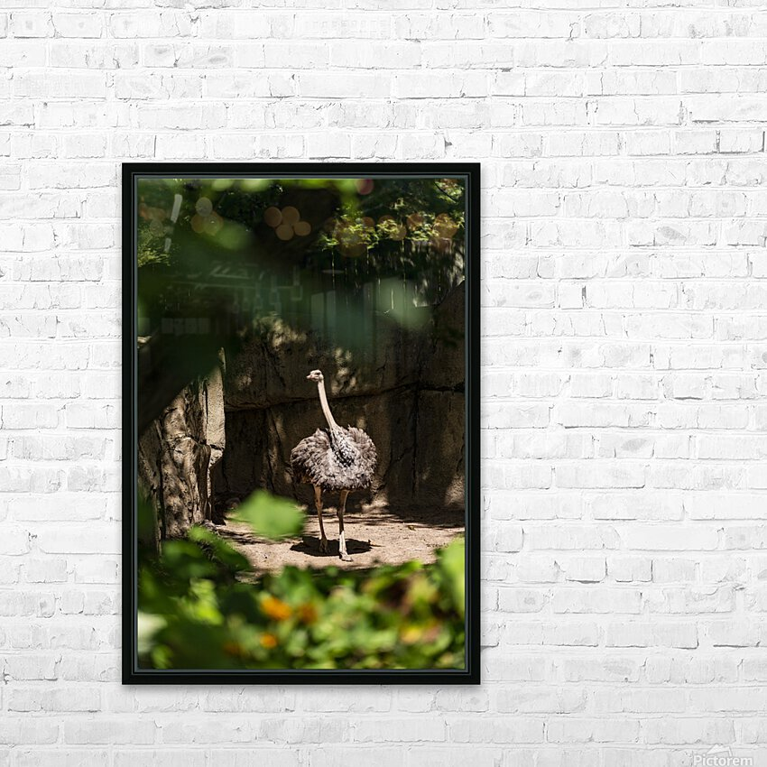 Feathers Fluffed  Ostrich  HD Sublimation Metal print with Decorating Float Frame (BOX)
