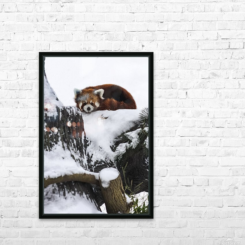 Red Panda HD Sublimation Metal print with Decorating Float Frame (BOX)