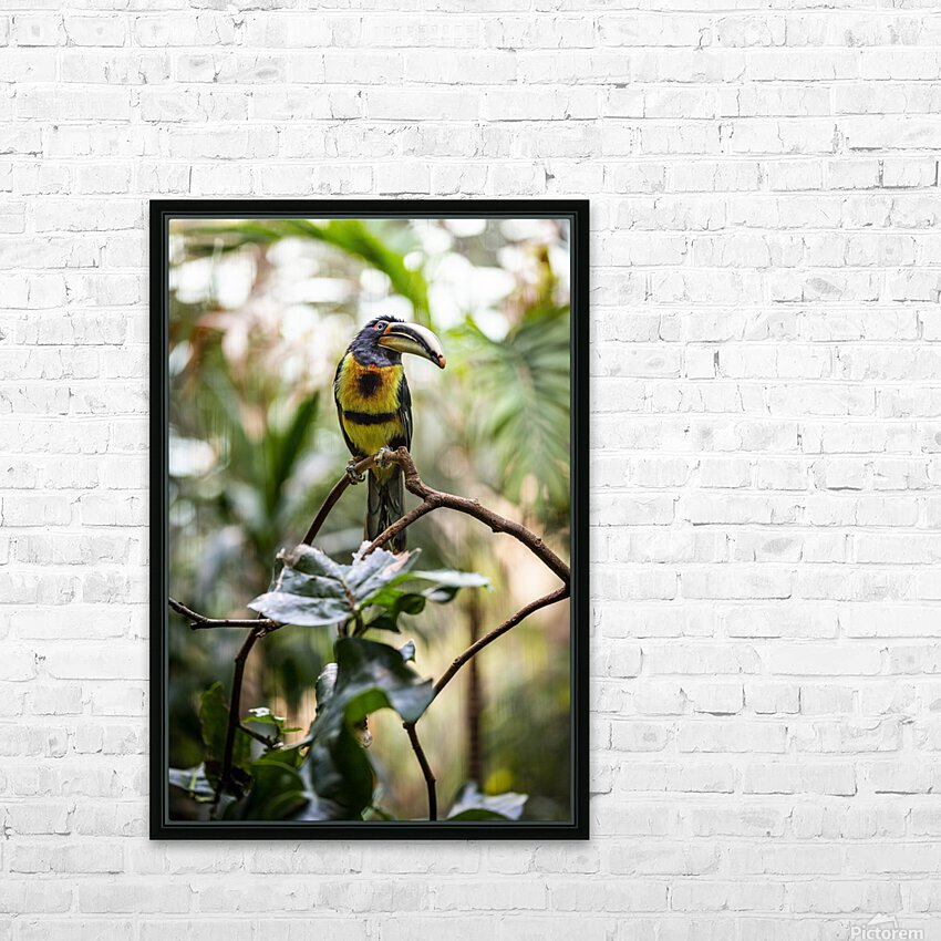 Standing Out  Tucan  HD Sublimation Metal print with Decorating Float Frame (BOX)