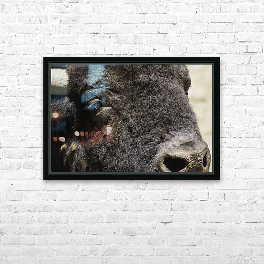 Reflection of a Buffalo HD Sublimation Metal print with Decorating Float Frame (BOX)