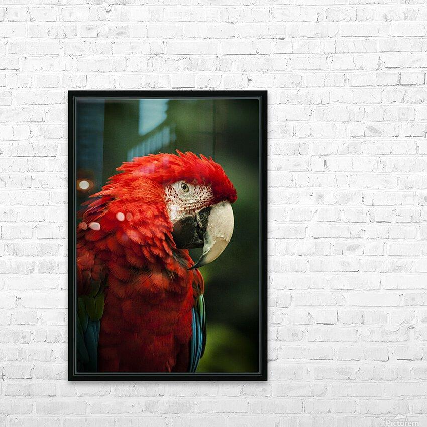 Parrot Portrait HD Sublimation Metal print with Decorating Float Frame (BOX)