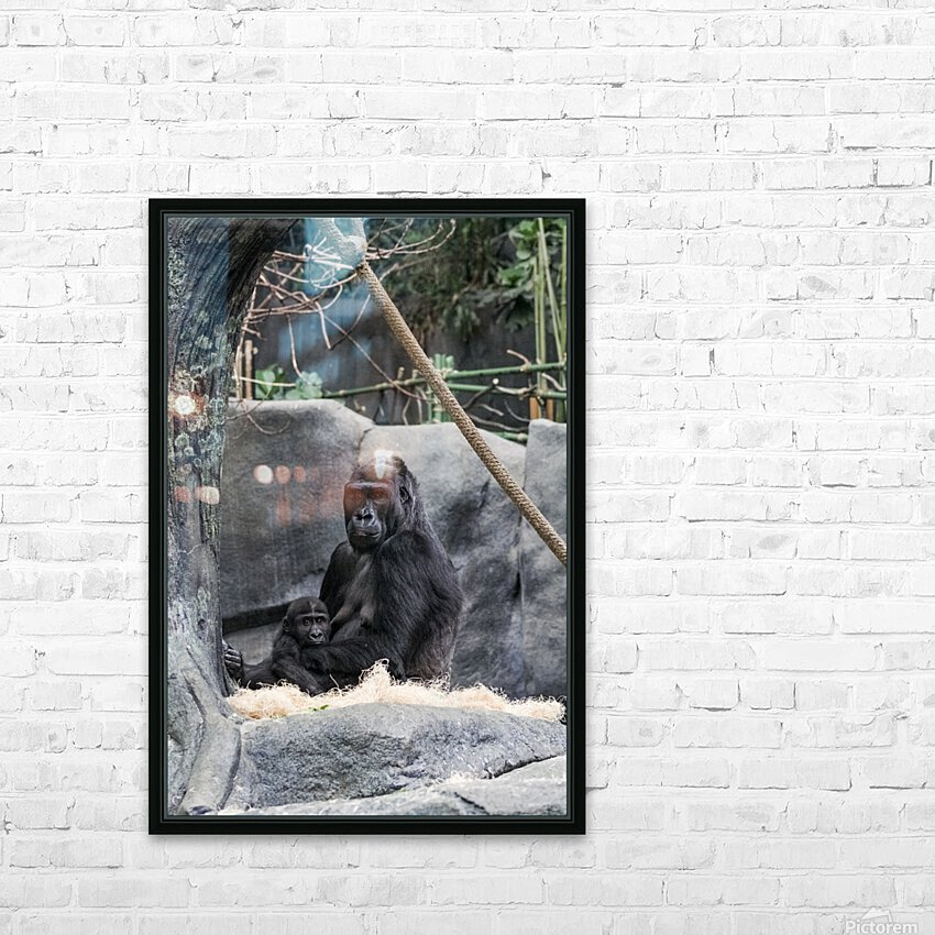 Baby Gorilla  HD Sublimation Metal print with Decorating Float Frame (BOX)