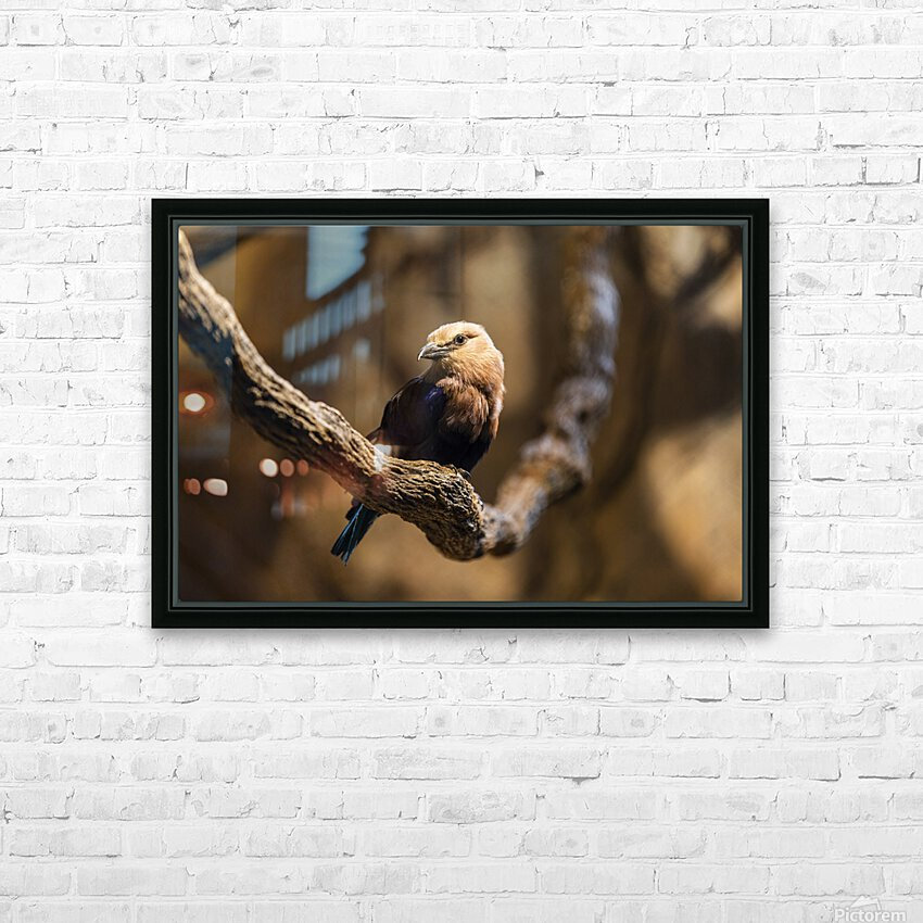 Perfect Pose  Bird  HD Sublimation Metal print with Decorating Float Frame (BOX)