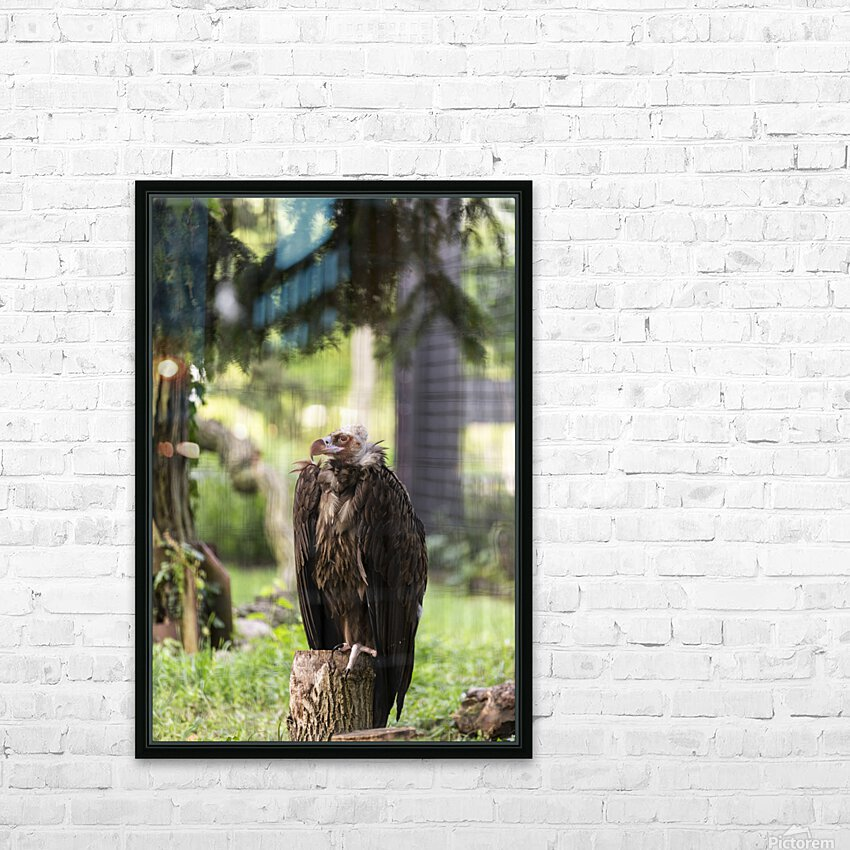 Buzzard HD Sublimation Metal print with Decorating Float Frame (BOX)
