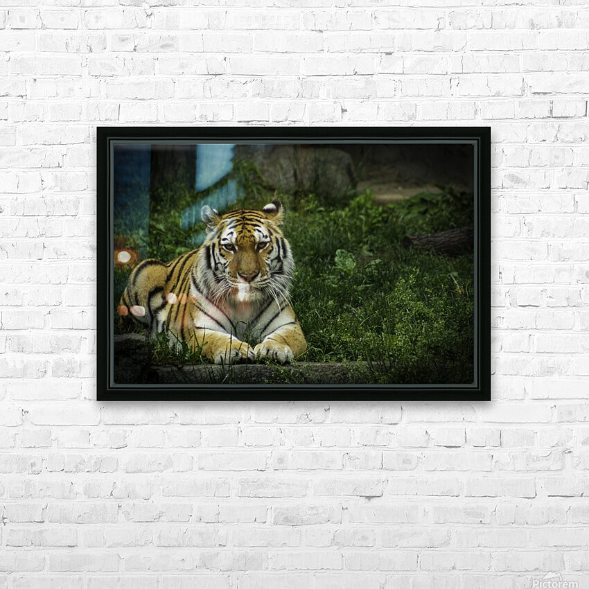 Next Strike  Tiger  HD Sublimation Metal print with Decorating Float Frame (BOX)