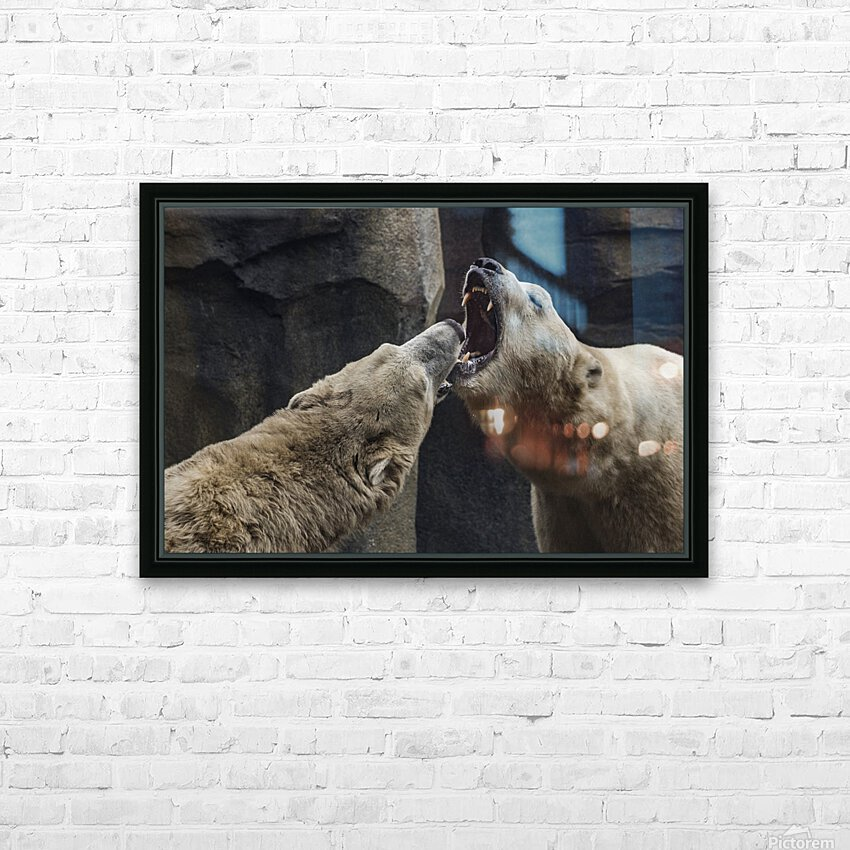 The Fight   Polar Bears  HD Sublimation Metal print with Decorating Float Frame (BOX)