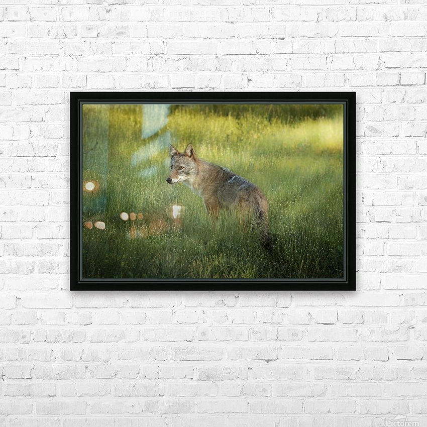 Evening Coyote HD Sublimation Metal print with Decorating Float Frame (BOX)
