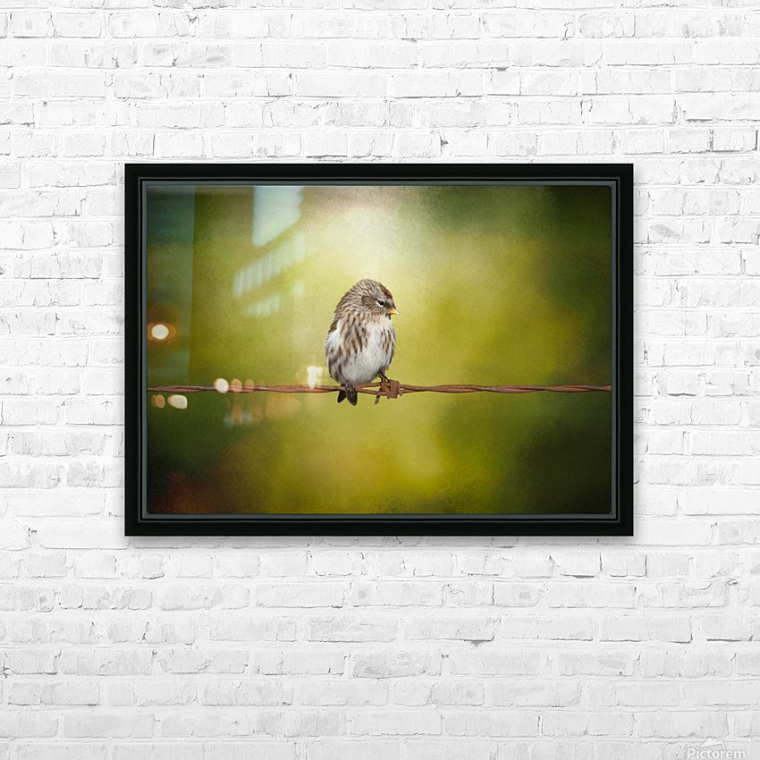 Redpoll on a Wire HD Sublimation Metal print with Decorating Float Frame (BOX)