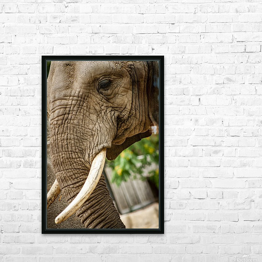 Wrinkles  Elephant  HD Sublimation Metal print with Decorating Float Frame (BOX)