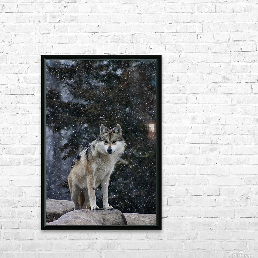 Cold Night Wolf HD Sublimation Metal print with Decorating Float Frame (BOX)