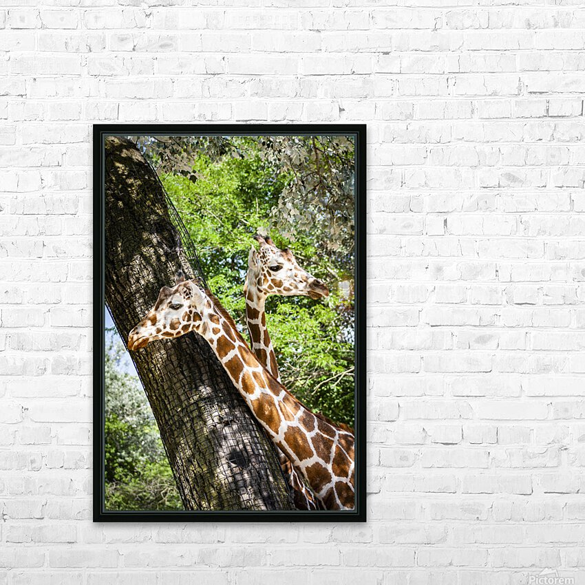 Spots Under Shadows  Giraffes  HD Sublimation Metal print with Decorating Float Frame (BOX)