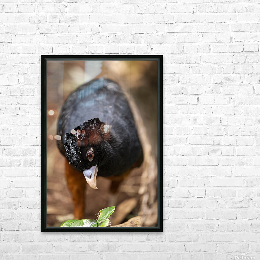 Whats This  Curassow  HD Sublimation Metal print with Decorating Float Frame (BOX)