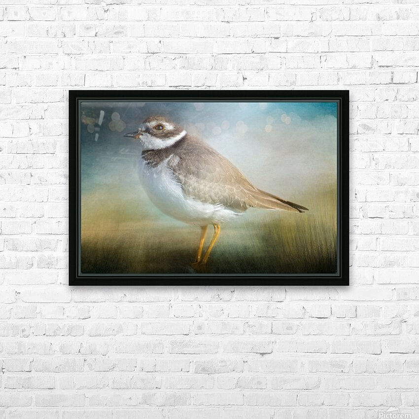 Semipalmated Plover HD Sublimation Metal print with Decorating Float Frame (BOX)