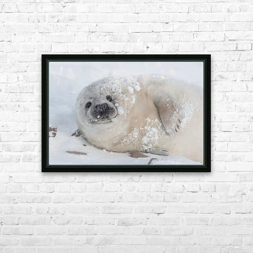 You can call me Snowball! HD Sublimation Metal print with Decorating Float Frame (BOX)