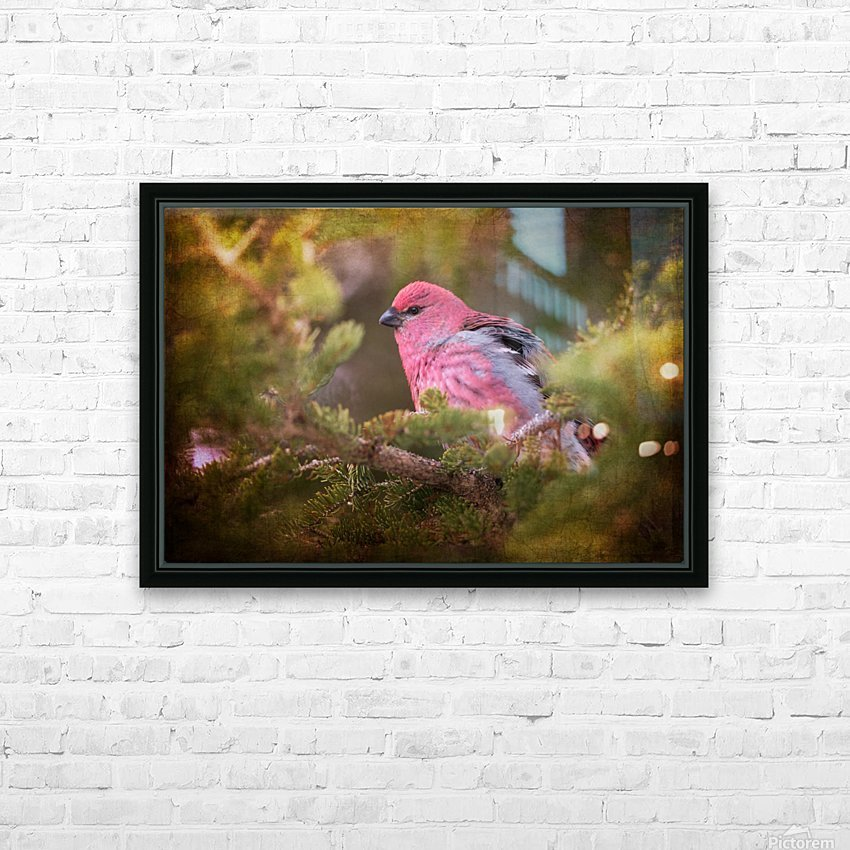 Male Pine Grosbeak HD Sublimation Metal print with Decorating Float Frame (BOX)