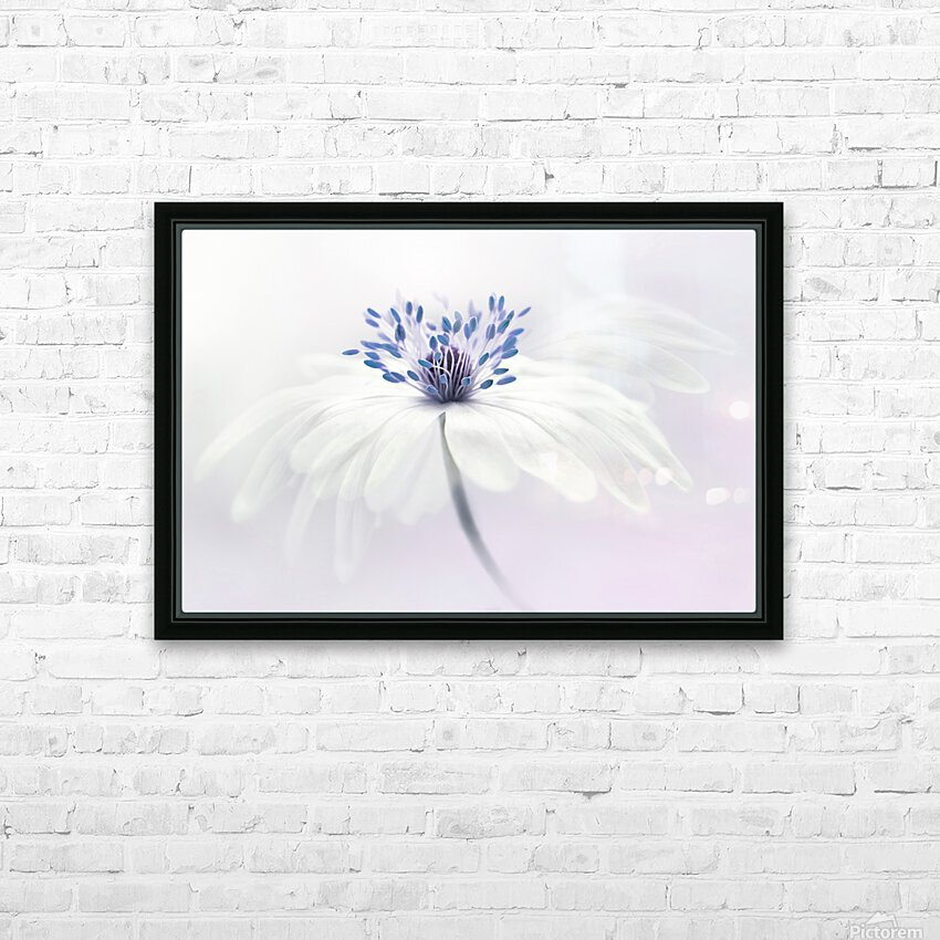 Anemone blanda HD Sublimation Metal print with Decorating Float Frame (BOX)