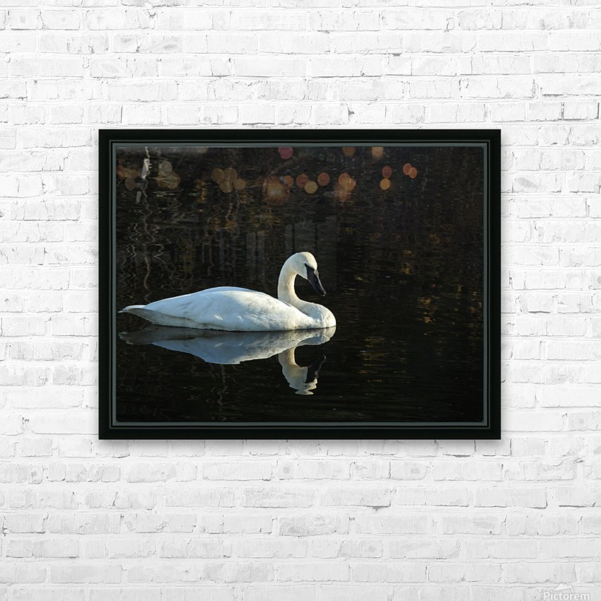 Trumpeter Swan at Estuary HD Sublimation Metal print with Decorating Float Frame (BOX)