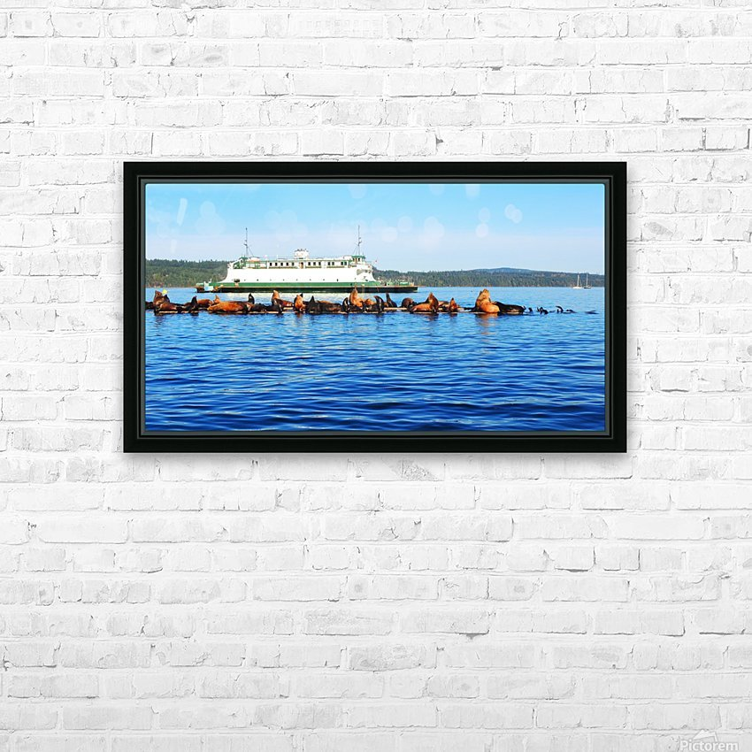 Sea Lions Hanging Out HD Sublimation Metal print with Decorating Float Frame (BOX)